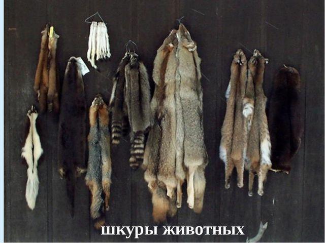 шкуры животных Беличьи шкуры
