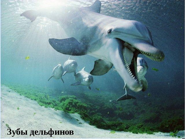 Зубы дельфинов