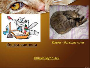 Кошки-чистюли Кошки – большие сони Кошки-мурлыки