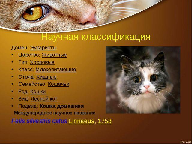 Научная классификация Домен:Эукариоты Царство:Животные Тип:Хордовые Класс:...