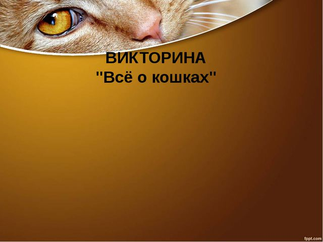 """ВИКТОРИНА """"Всё о кошках"""""""