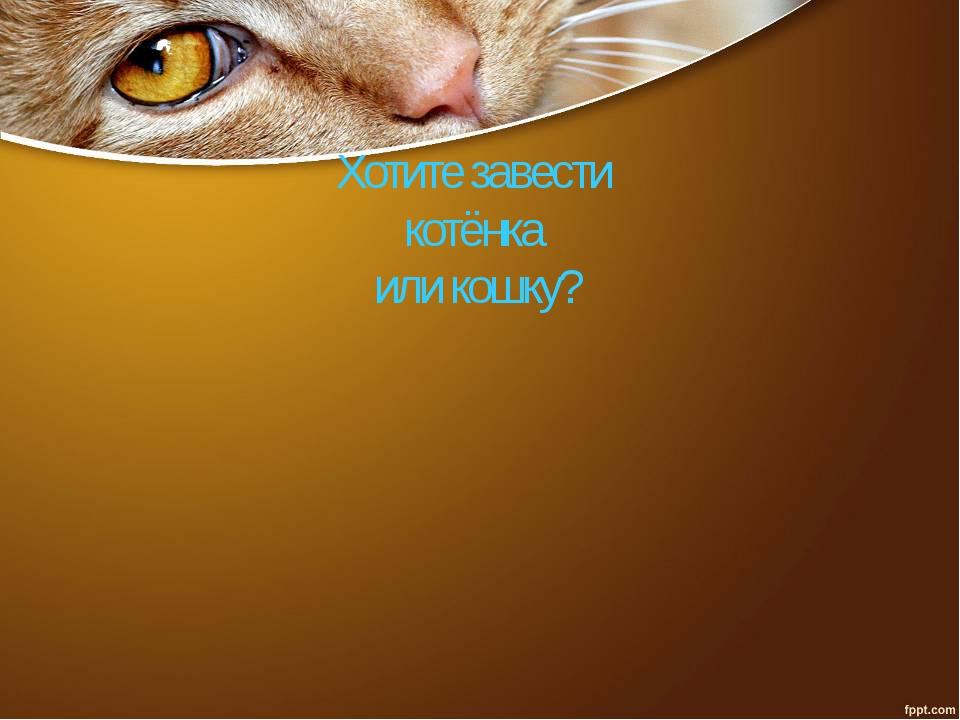 Хотите завести котёнка или кошку?