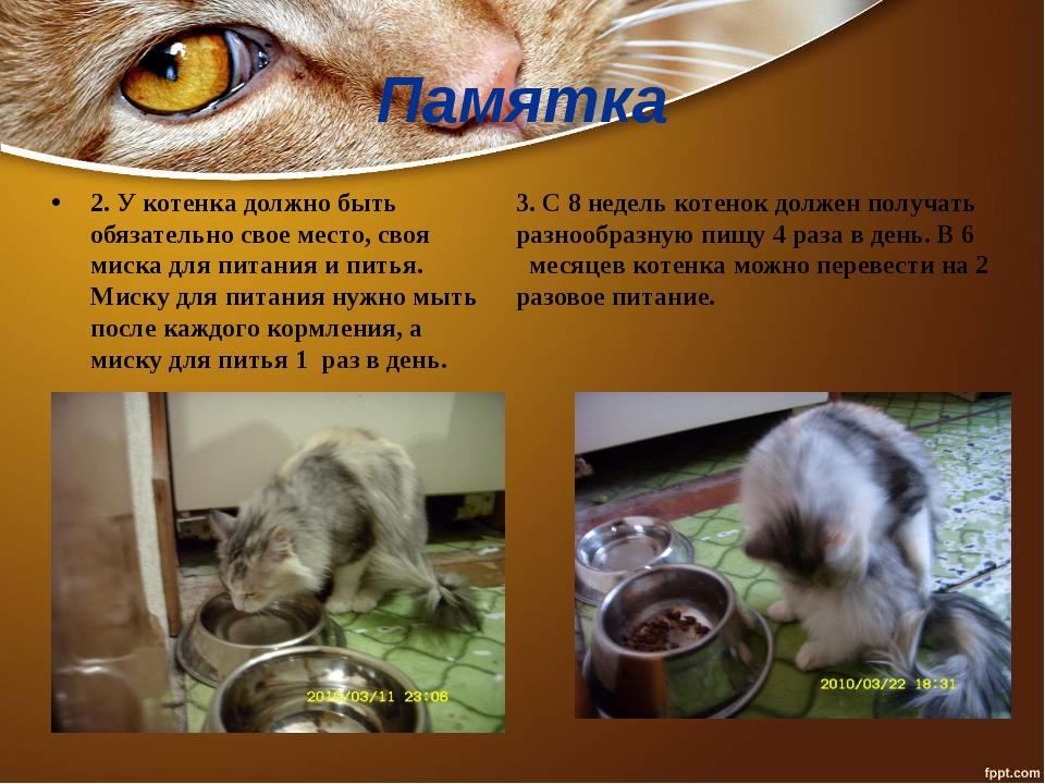 Памятка 2. У котенка должно быть обязательно свое место, своя миска для питан...