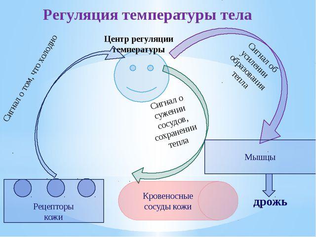 Центр регуляции температуры Сигнал об усилении образования тепла Сигнал о то...