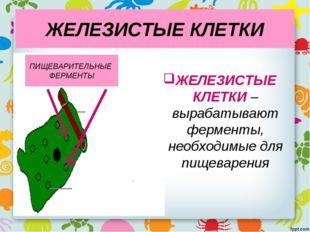 ЖЕЛЕЗИСТЫЕ КЛЕТКИ ЖЕЛЕЗИСТЫЕ КЛЕТКИ – вырабатывают ферменты, необходимые для