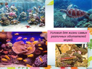 Условия для жизни самых различных обитателей морей.