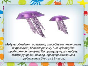 Медузы обладают органами, способными улавливать инфразвуки, благодаря чему он
