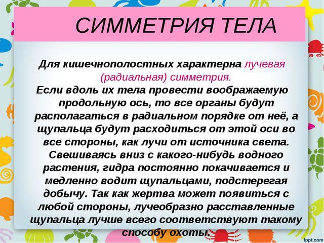 СИММЕТРИЯ ТЕЛА Для кишечнополостных характерна лучевая (радиальная) симметри...