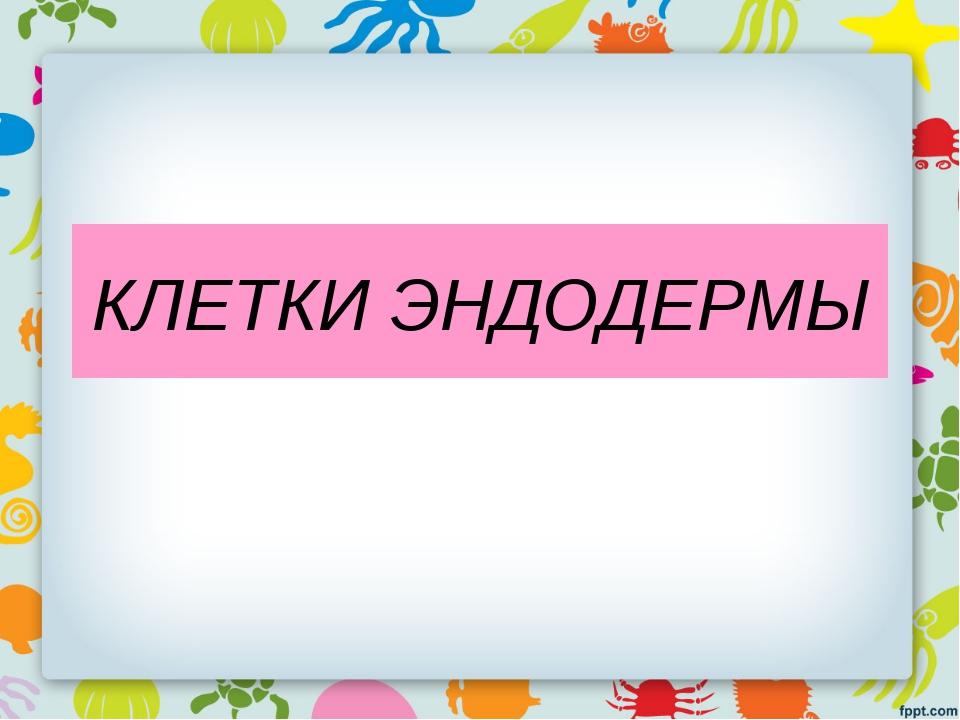 КЛЕТКИ ЭНДОДЕРМЫ