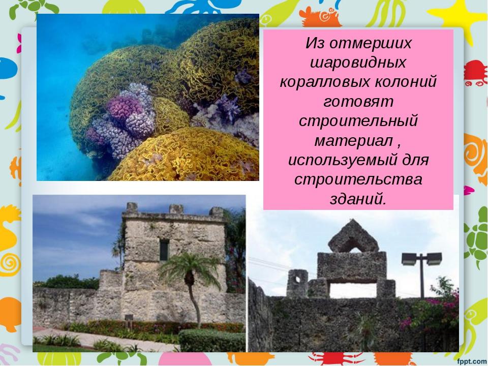 Из отмерших шаровидных коралловых колоний готовят строительный материал , исп...