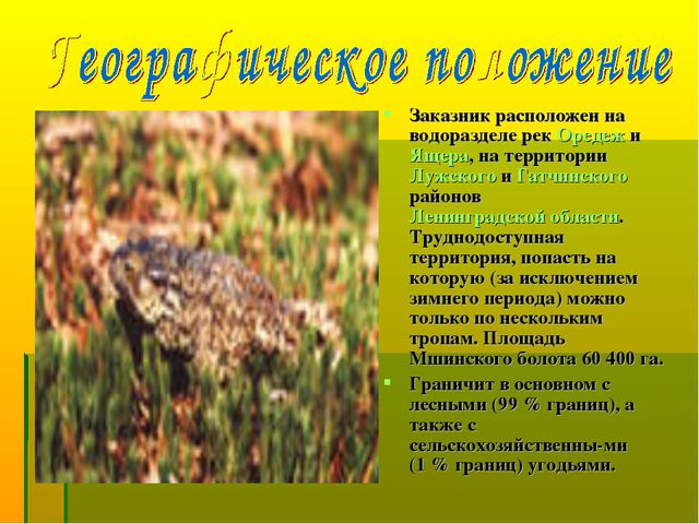 Заказник расположен на водоразделе рек Оредеж и Ящера, на территории Лужского...