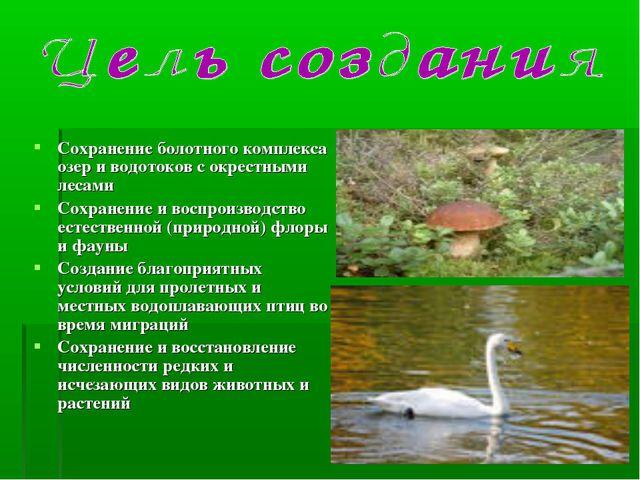 Сохранение болотного комплекса озер и водотоков с окрестными лесами Сохранени...