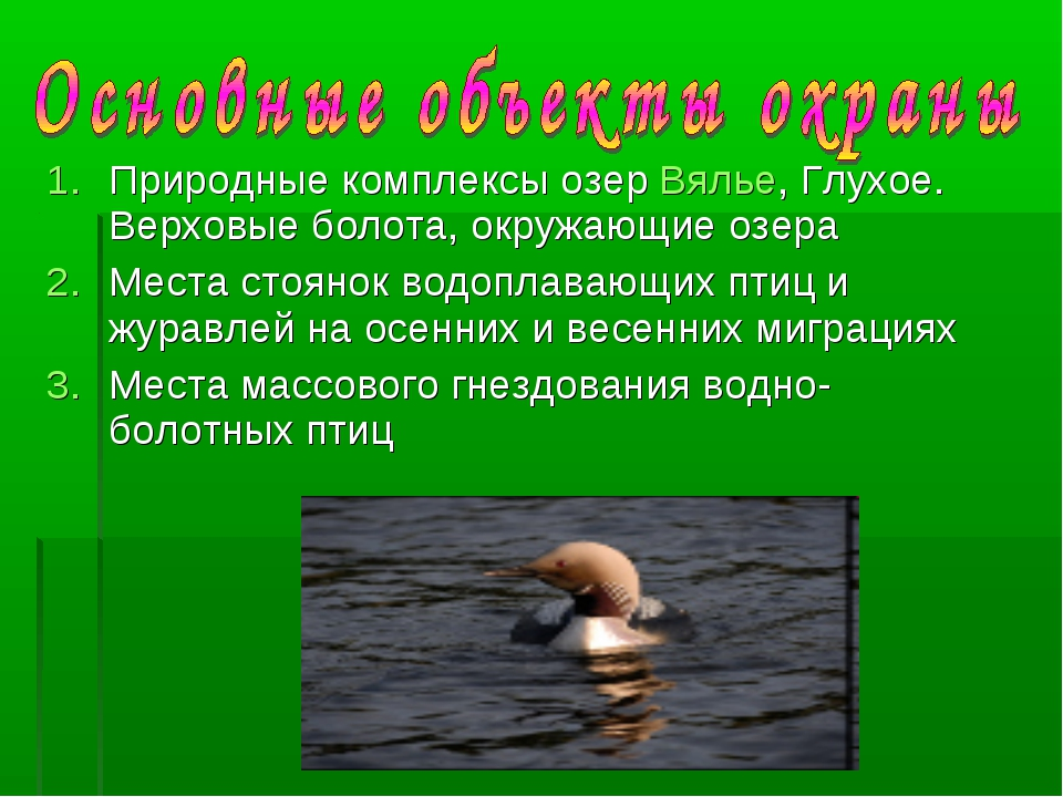 Природные комплексы озер Вялье, Глухое. Верховые болота, окружающие озера Мес...