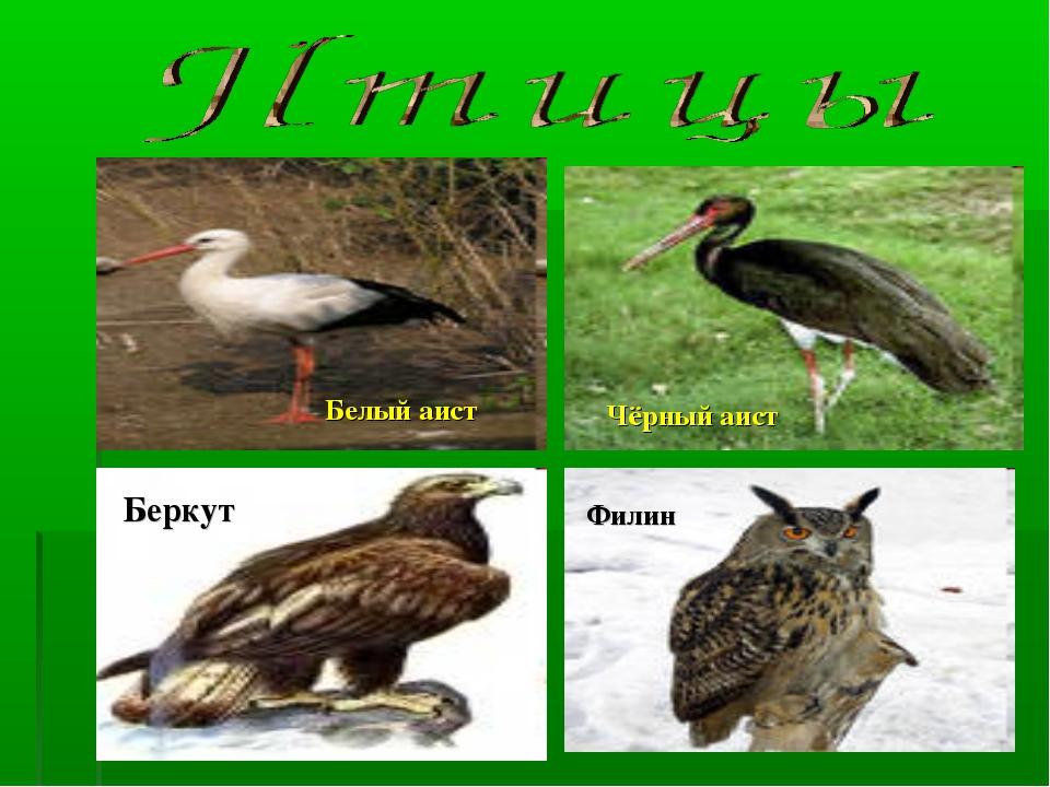Белый аист Чёрный аист Беркут Филин