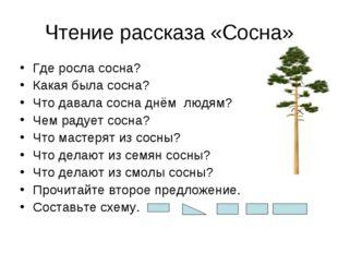 Чтение рассказа «Сосна» Где росла сосна? Какая была сосна? Что давала сосна д