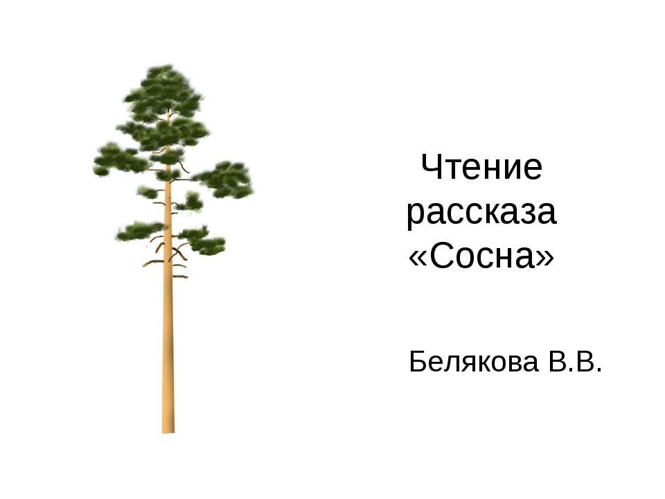 Чтение рассказа «Сосна» Белякова В.В.
