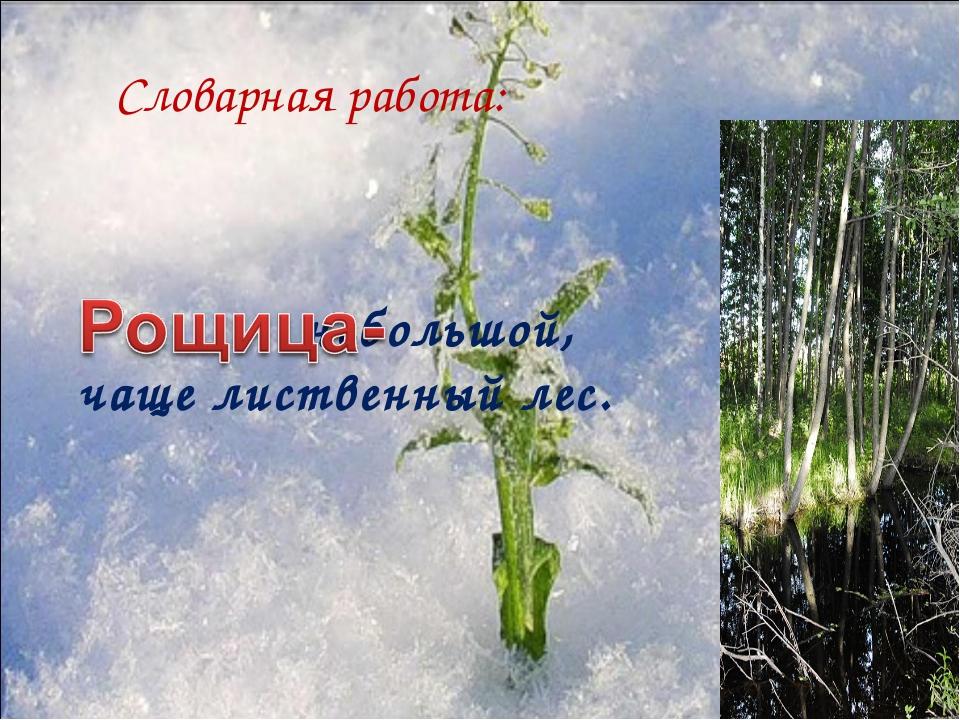 Словарная работа: небольшой, чаще лиственный лес.