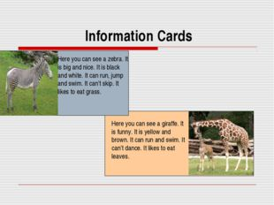 Information Cards Here you can see a zebra. It is big and nice. It is black