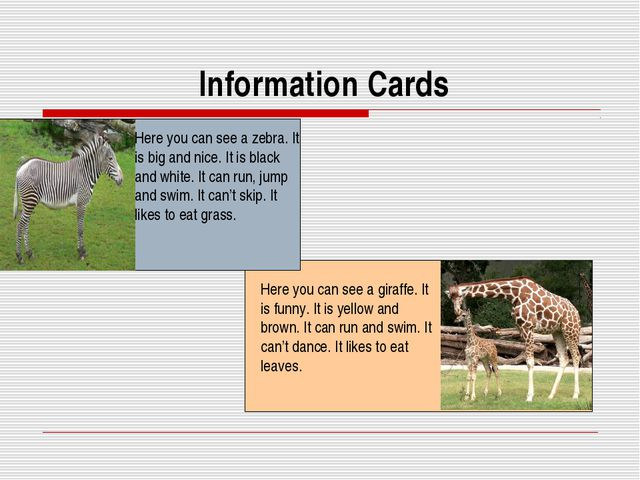 Information Cards Here you can see a zebra. It is big and nice. It is black...