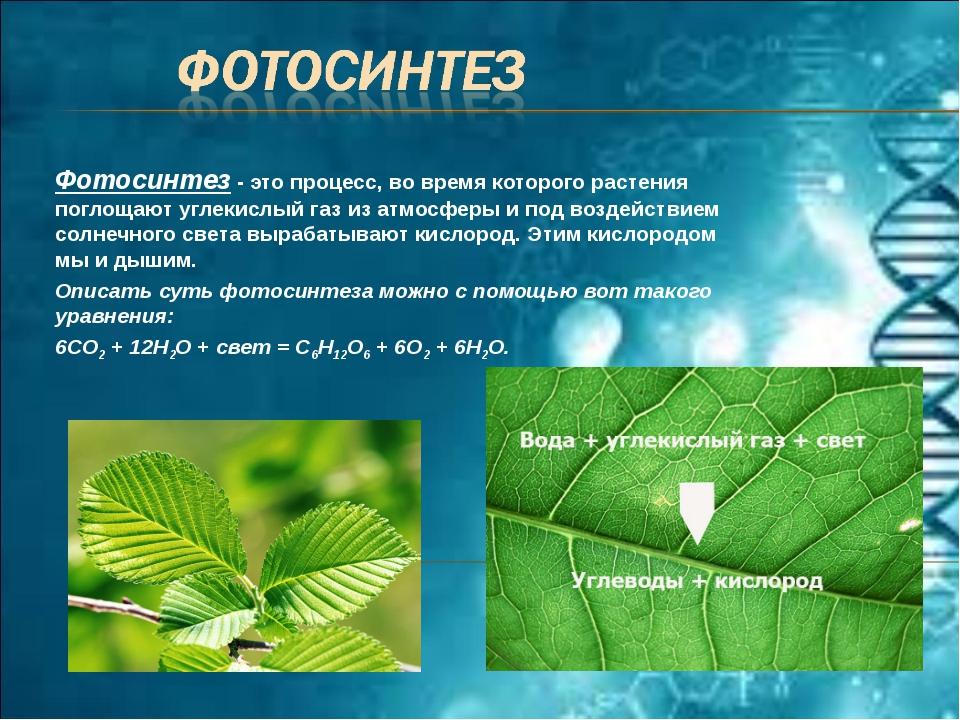 Фотосинтез - это процесс, во время которого растения поглощают углекислый газ...