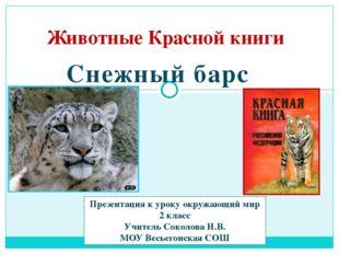 Животные Красной книги Снежный барс Презентация к уроку окружающий мир 2 клас