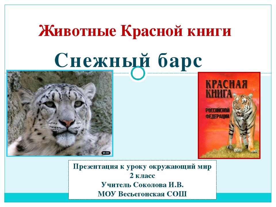 Животные Красной книги Снежный барс Презентация к уроку окружающий мир 2 клас...