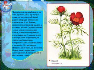Чудові квіти приваблюють до себе браконьєрів, що хочуть нажитися на пограбува