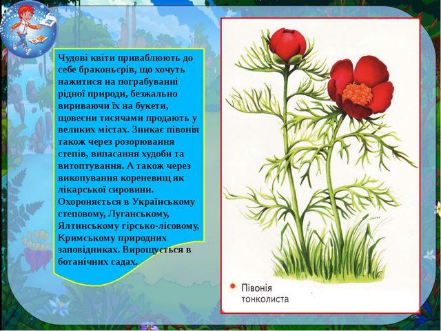 Чудові квіти приваблюють до себе браконьєрів, що хочуть нажитися на пограбува...