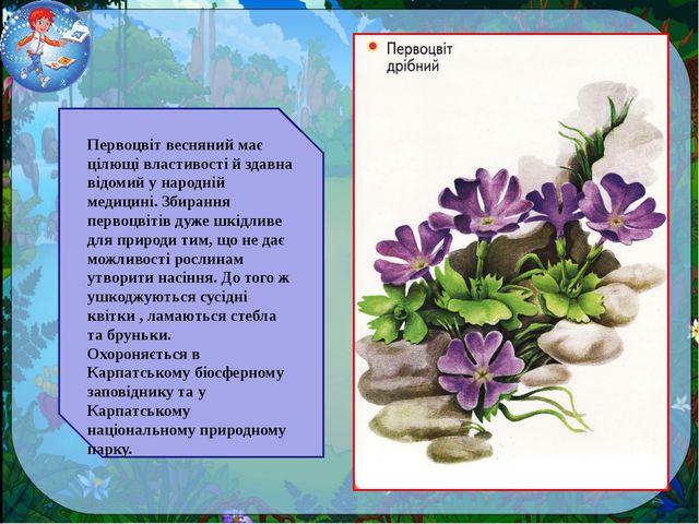 Первоцвіт весняний має цілющі властивості й здавна відомий у народній медицин...