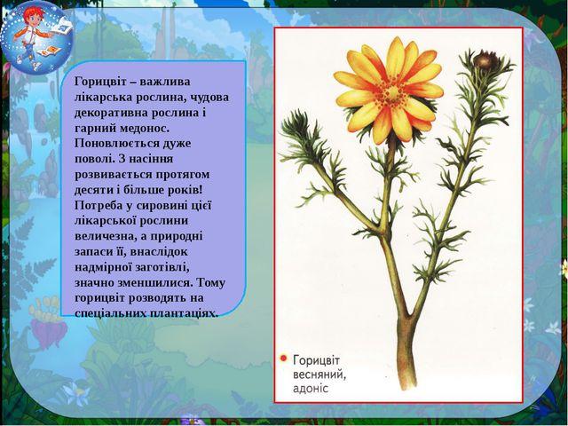 Горицвіт – важлива лікарська рослина, чудова декоративна рослина і гарний мед...