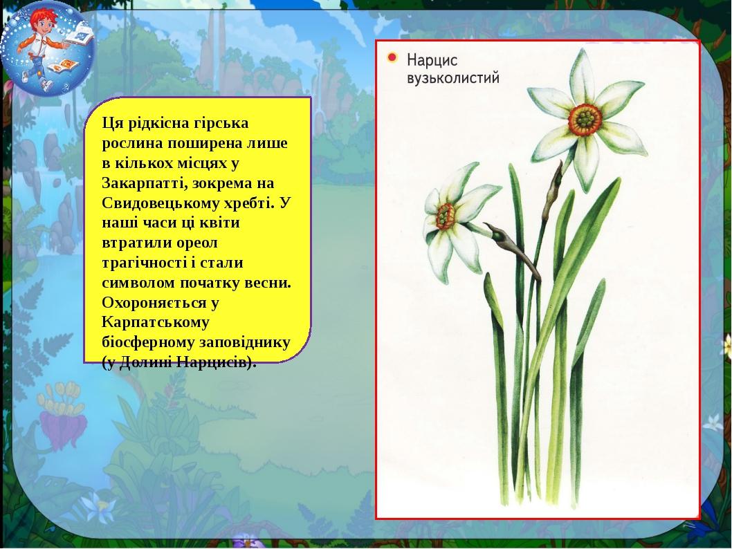 Ця рідкісна гірська рослина поширена лише в кількох місцях у Закарпатті, зокр...