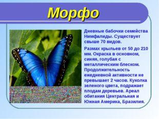 Морфо Дневные бабочки семейства Нимфалиды. Существует свыше 70 видов. Размах