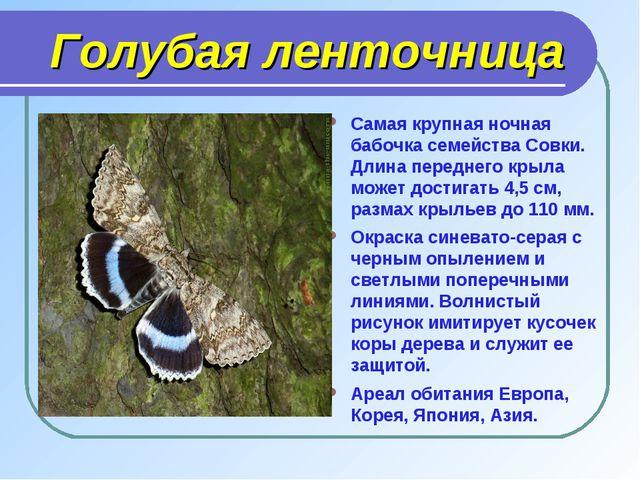 Голубая ленточница Самая крупная ночная бабочка семейства Совки. Длина перед...