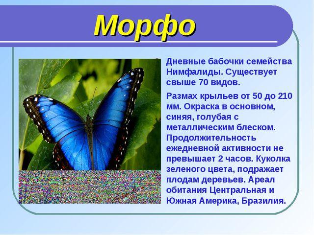 Морфо Дневные бабочки семейства Нимфалиды. Существует свыше 70 видов. Размах...