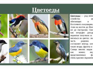 Цветоеды Цветоеды — род певчих птиц из семейства цветоедовых, обитающих в тро