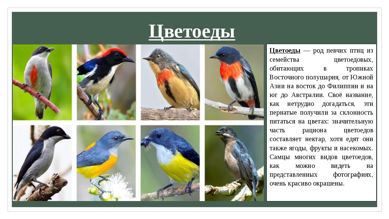 Цветоеды Цветоеды — род певчих птиц из семейства цветоедовых, обитающих в тро...
