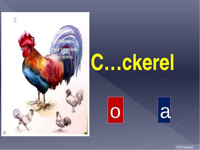 C…ckerel o a И.В.Ремизова