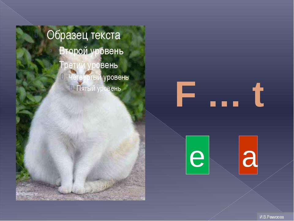 F … t a e И.В.Ремизова