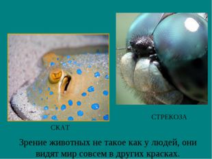 Зрение животных не такое как у людей, они видят мир совсем в других красках.