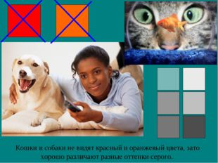 Кошки и собаки не видят красный и оранжевый цвета, зато хорошо различают разн