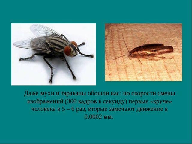 Даже мухи и тараканы обошли нас: по скорости смены изображений (300 кадров в...