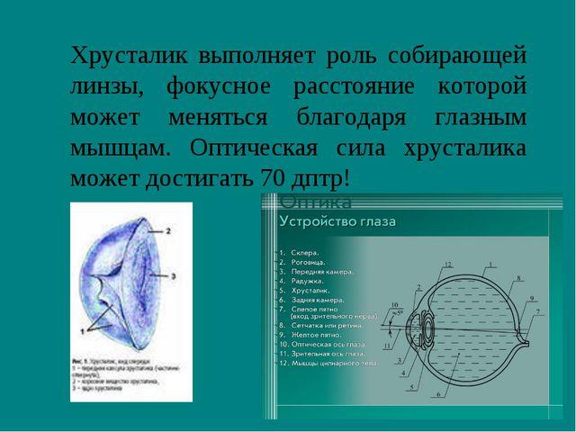 Хрусталик выполняет роль собирающей линзы, фокусное расстояние которой может...
