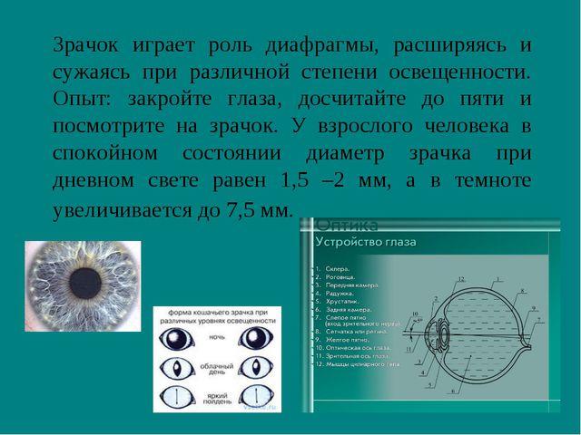 Зрачок играет роль диафрагмы, расширяясь и сужаясь при различной степени осв...