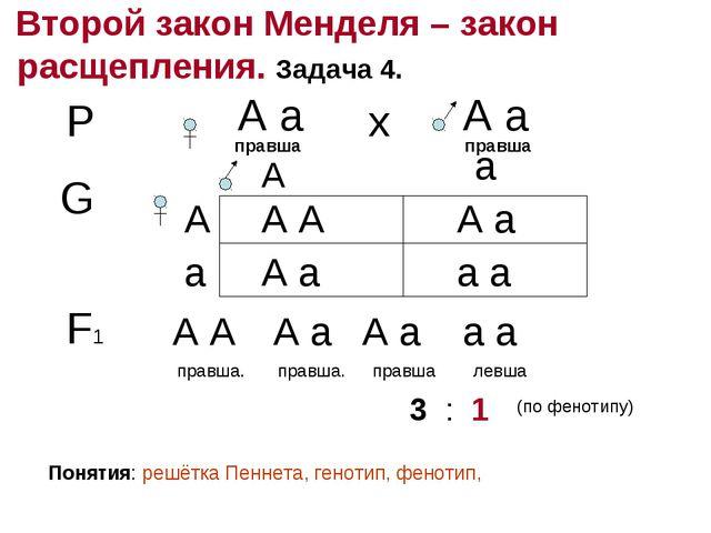Второй закон Менделя – закон расщепления. Задача 4. Р А а правша А а правша...