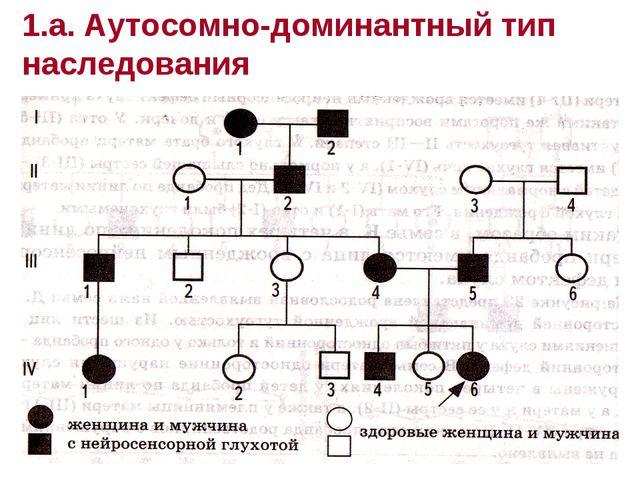 1.а. Аутосомно-доминантный тип наследования