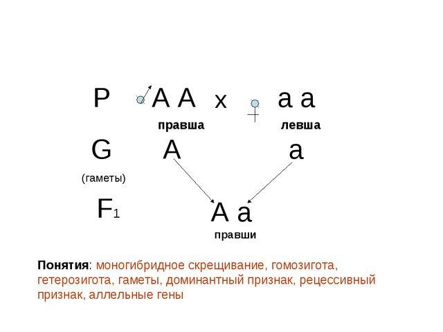 Р А А а а х правша левша G (гаметы) А а F1 А а правши Понятия: моногибридное...