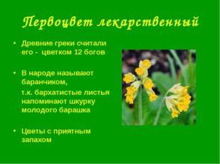 Первоцвет лекарственный Древние греки считали его - цветком 12 богов В народе