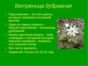 Ветреница дубравная Подснежники – это все цветы, которые появляются ранней ве
