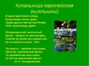 Купальница европейская (култышки) В красе цветочного убора, Когда вокруг весн