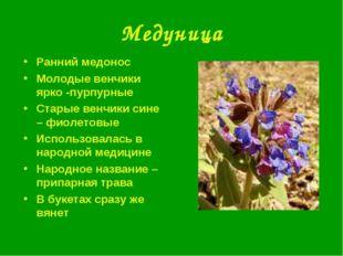 Медуница Ранний медонос Молодые венчики ярко -пурпурные Старые венчики сине –